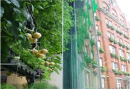 The Urban Agriculture Curtain