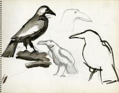 'Crow'