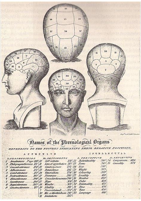 Names of the Phrenological Organs: Dissertation by Rosanna Wood University of Brighton