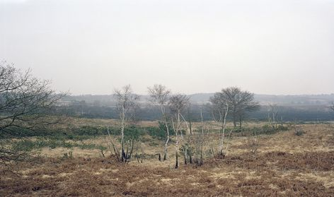 Chobham Common, Winter 2011