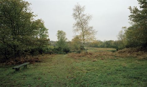 Chobham Common, Autumn 2010