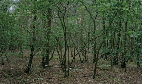 Horsell Common, 2005