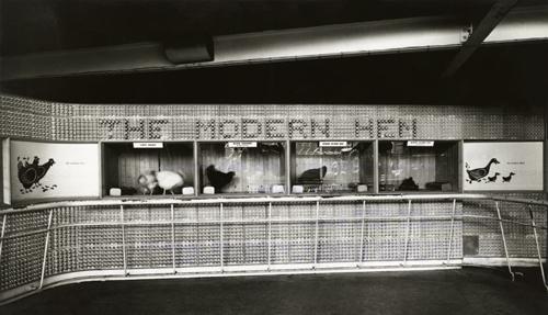 Modern Hen