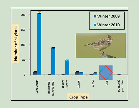 number-of-over-wintering-skylarks-in-different-crops