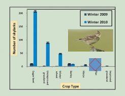 number-of-over-wintering-skylarks-in-different-crops.jpg