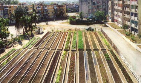 Continuous productive urban landscape