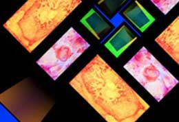 fusebox thumbnail imagery of coloured digital fuse rectangles